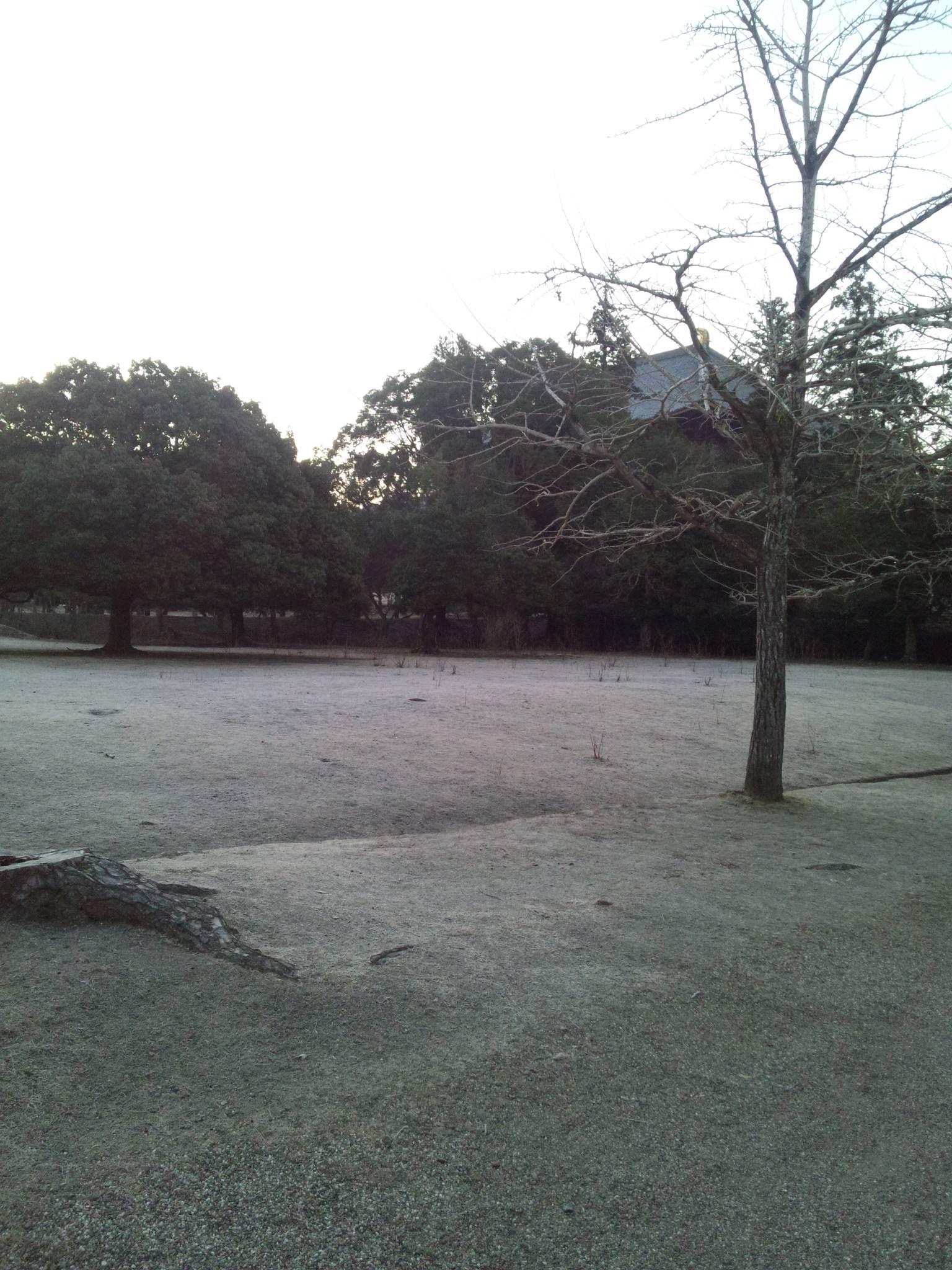 おはよう東大寺〜久しぶり〜_c0001670_6532559.jpg