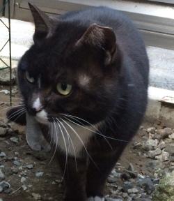 黒猫は魔除け_f0325471_21005245.jpg