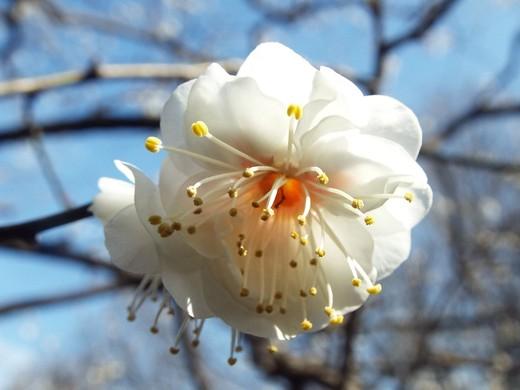 2月10日 生田緑地観察会_e0145782_1526513.jpg