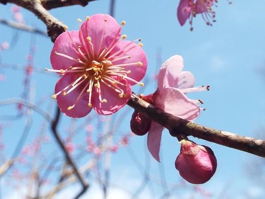 2月10日 生田緑地観察会_e0145782_15283826.jpg