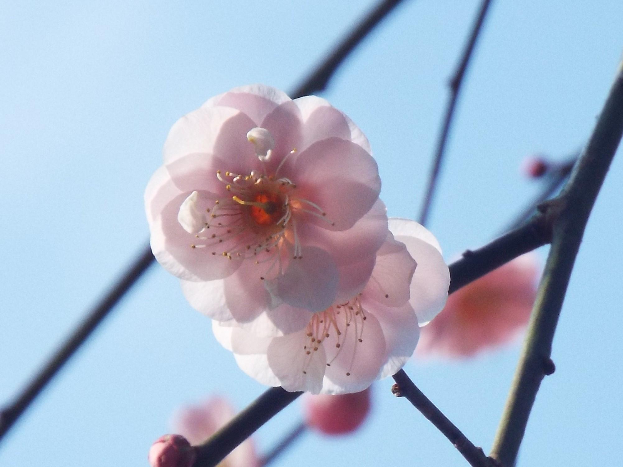 2月10日 生田緑地観察会_e0145782_15314876.jpg