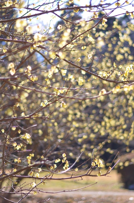 真冬の花_a0126590_23234818.jpg