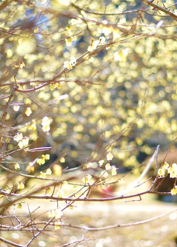 真冬の花_a0126590_23240275.jpg