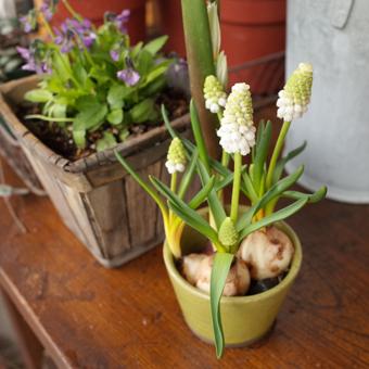 Soldesと植物とお菓子 1日目_c0200002_221214.jpg