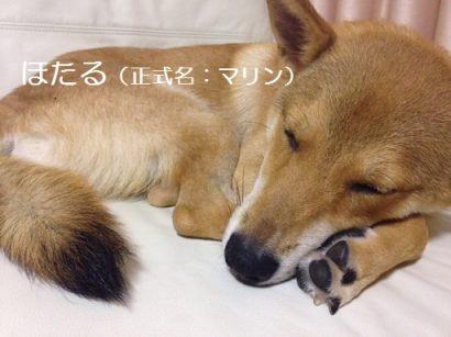 あんこちゃん 新生活スタート!_f0242002_22113733.jpg