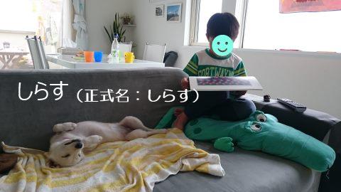 あんこちゃん 新生活スタート!_f0242002_2232043.jpg