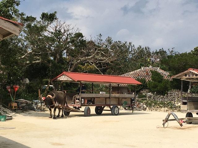 八重山諸島での夢のような4日間(*˘︶˘*).。.:*♡_a0213806_22362743.jpg
