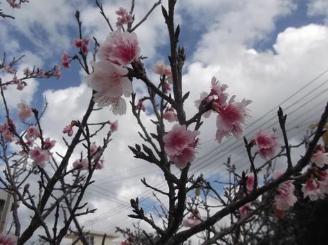 桜_f0213709_17857.jpg