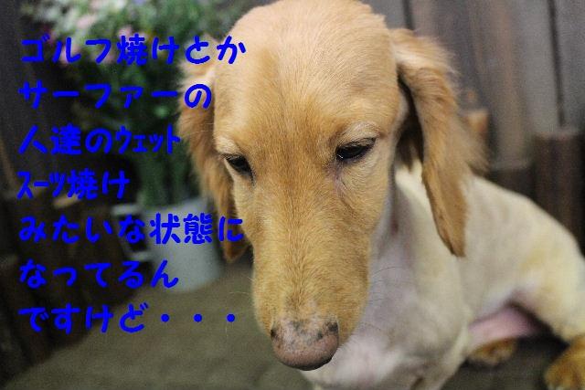 バレンタイン♪_b0130018_23454438.jpg