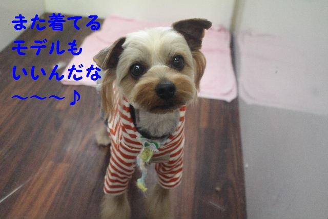 バレンタイン♪_b0130018_23484566.jpg
