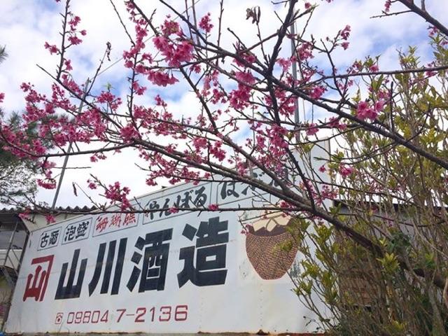 山川酒造さんが泡盛トリコロールに_c0108695_16524789.jpg