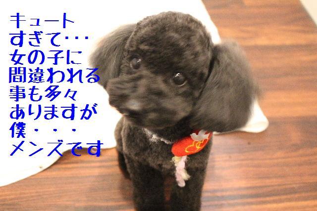 きんちゃんも・・・♪_b0130018_17535255.jpg