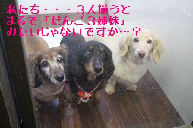 きんちゃんも・・・♪_b0130018_180133.jpg