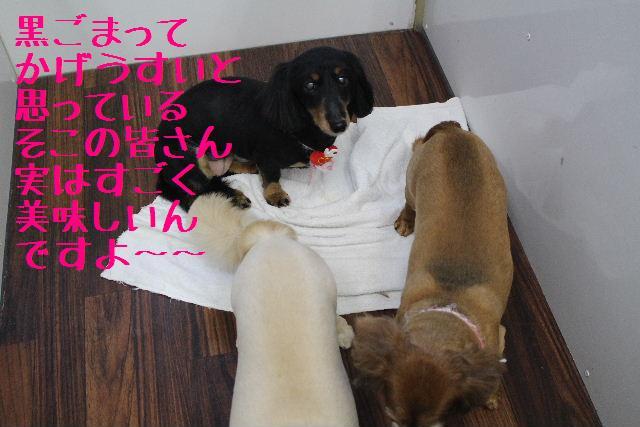 きんちゃんも・・・♪_b0130018_1803341.jpg