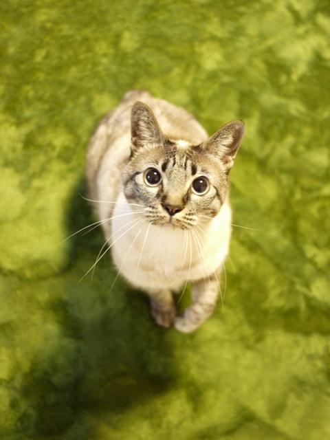 猫のお留守番 カン太くんルノーちゃん編。_a0143140_2311183.jpg