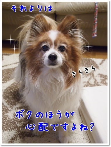 d0013149_00032082.jpg