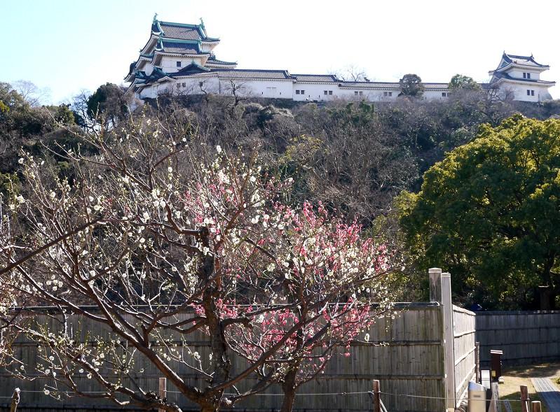 和歌山城公園にて_b0093754_19193695.jpg