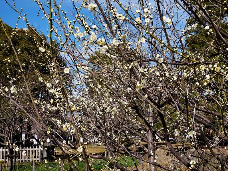 和歌山城公園にて_b0093754_1920144.jpg
