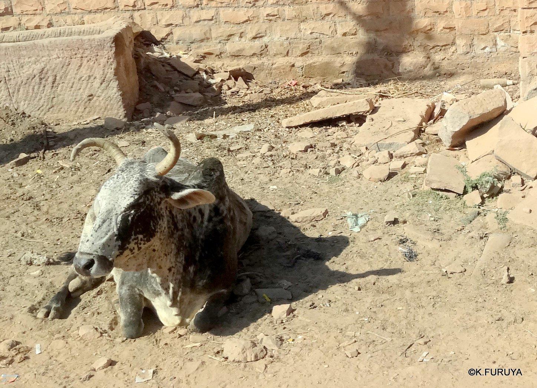 インド・ラジャスタンの旅 6 メヘラーンガル砦 その2_a0092659_18321953.jpg