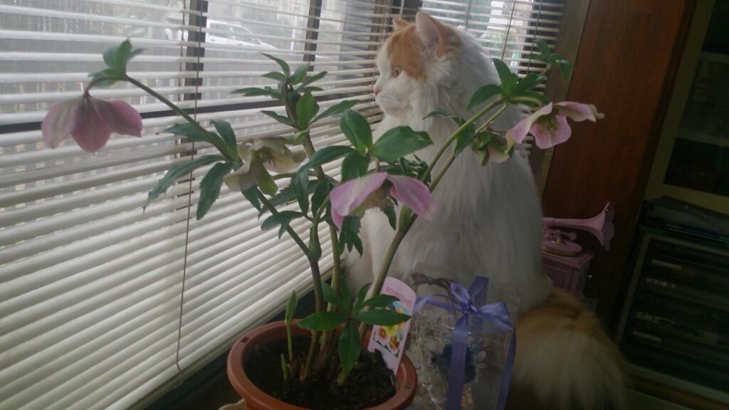 庭先に福寿草が顔を出して_d0116059_17351074.jpg