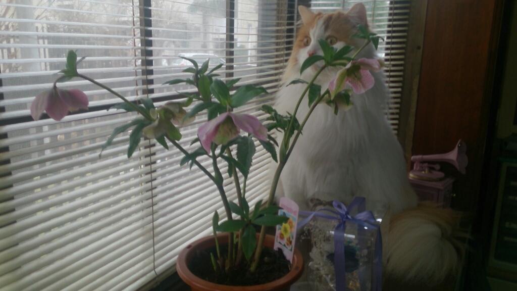 庭先に福寿草が顔を出して_d0116059_17351239.jpg