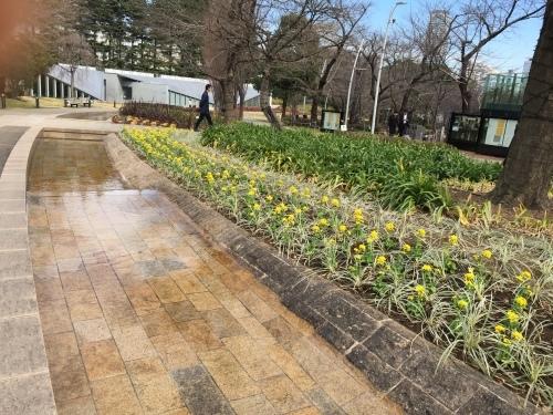 春が来た!_b0093660_18173865.jpeg