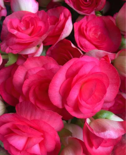 真紅の薔薇 一足お先のバレンタイン?_f0355367_00374698.jpg