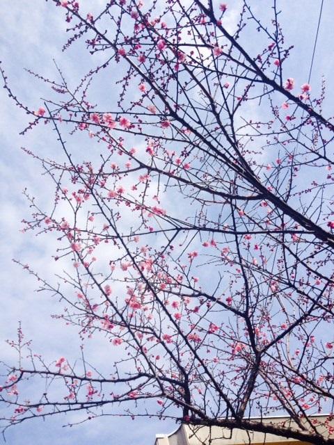 花粉症_f0204295_1212369.jpg