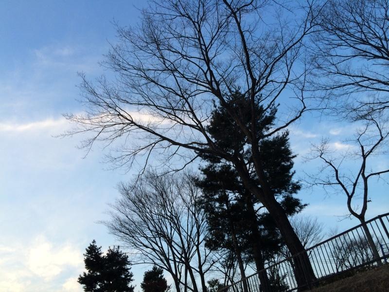 空を見上げて_a0354598_00432375.jpg