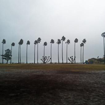 今朝の激しい風と雨_c0195909_10205114.jpg