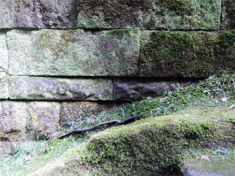 東慶寺の山茱萸 (さんしゅゆ)_c0195909_14591697.jpg