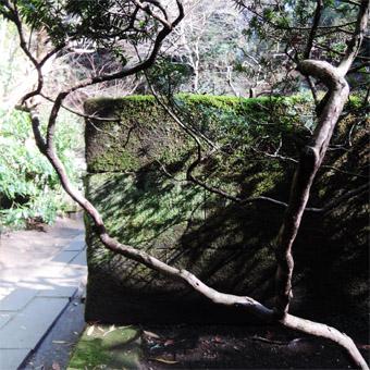 東慶寺の山茱萸 (さんしゅゆ)_c0195909_14592126.jpg