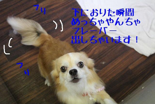 きんちゃんも・・・♪_b0130018_8102382.jpg