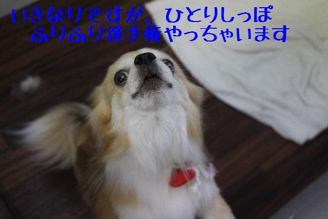 きんちゃんも・・・♪_b0130018_8103240.jpg
