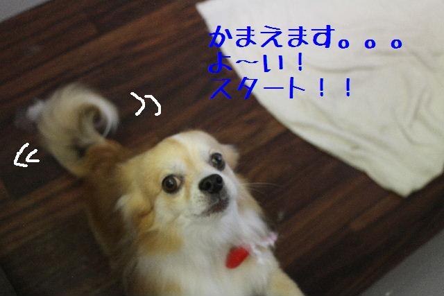 きんちゃんも・・・♪_b0130018_810426.jpg