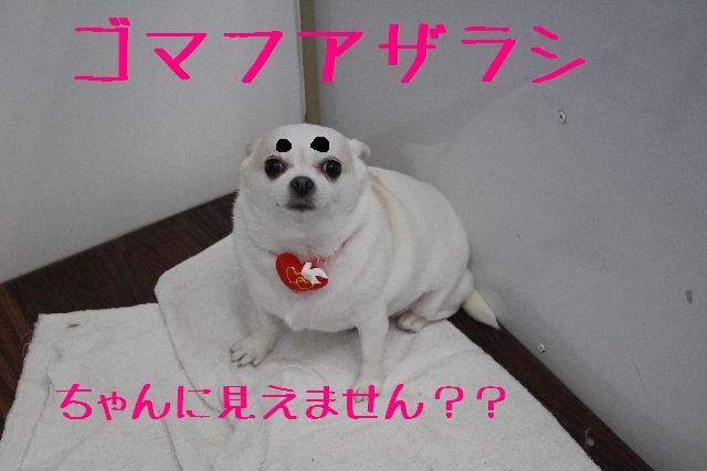 きんちゃんも・・・♪_b0130018_81599.jpg