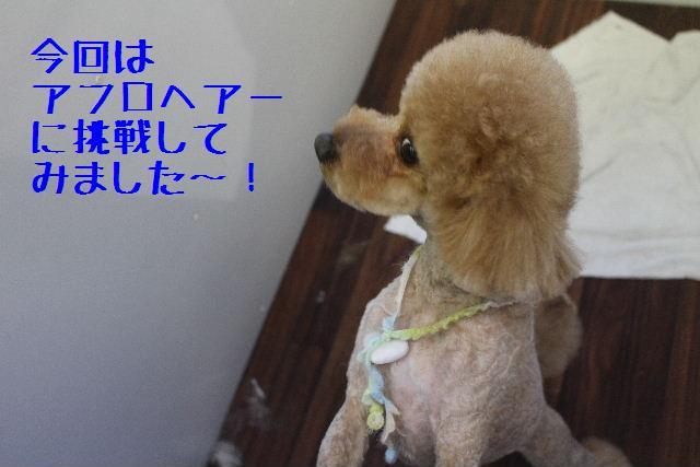 きんちゃんも・・・♪_b0130018_834972.jpg