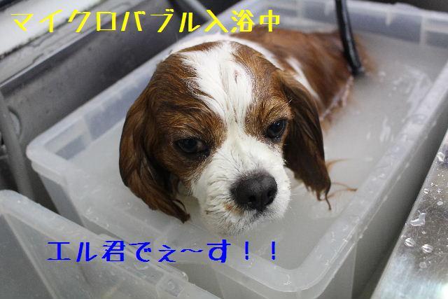 きんちゃんも・・・♪_b0130018_852681.jpg