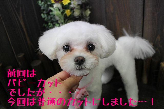 きんちゃんも・・・♪_b0130018_8808.jpg