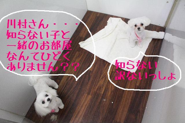 きんちゃんも・・・♪_b0130018_883959.jpg
