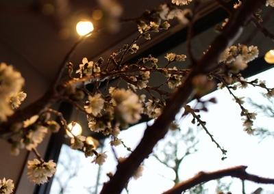 ウィンドウの桜だより 2_a0279848_18070801.jpg