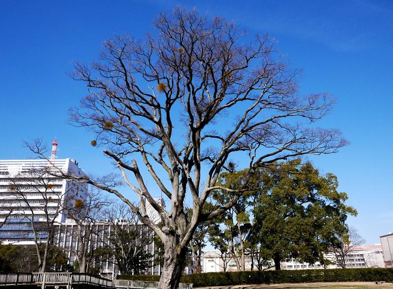 和歌山城公園にて_b0093754_20113586.jpg