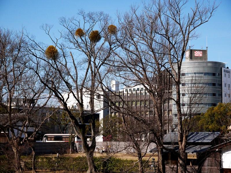 和歌山城公園にて_b0093754_2011966.jpg