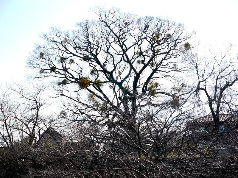 和歌山城公園にて_b0093754_20125077.jpg