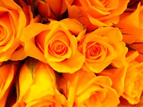 Happy Valentine*s Day*のティータイム♡Petit fours frais ♡Pierre Hermé Paris New Otani *† ♡   _a0053662_12545746.jpg