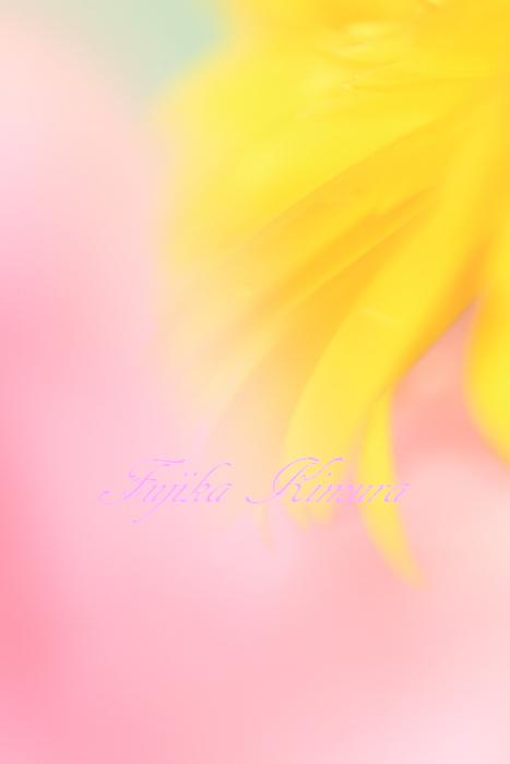 ■■ 春一番 ■■_c0195662_21593828.jpg