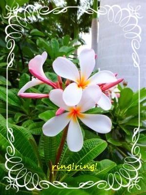 f0195131_00385784.jpg