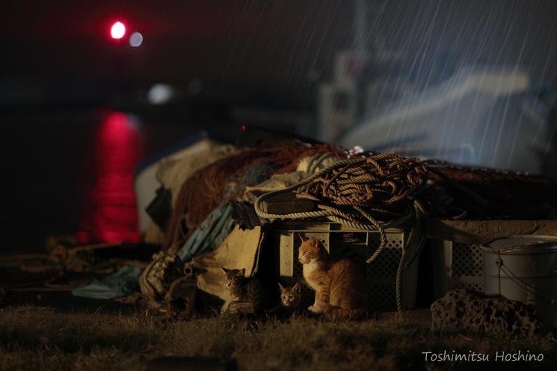 「海猫夢幻」~東京湾岸に生きる猫たちの記憶~_c0194541_1553298.jpg