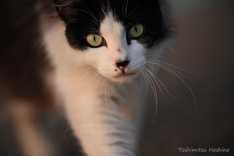 「海猫夢幻」~東京湾岸に生きる猫たちの記憶~_c0194541_15534467.jpg