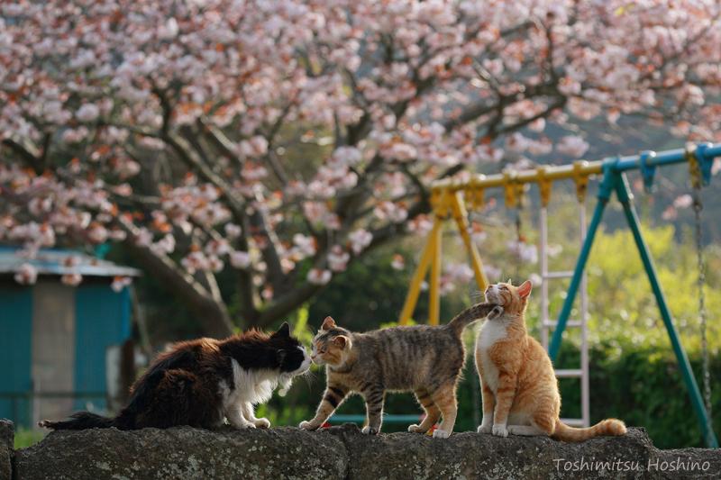 「海猫夢幻」~東京湾岸に生きる猫たちの記憶~_c0194541_1553616.jpg